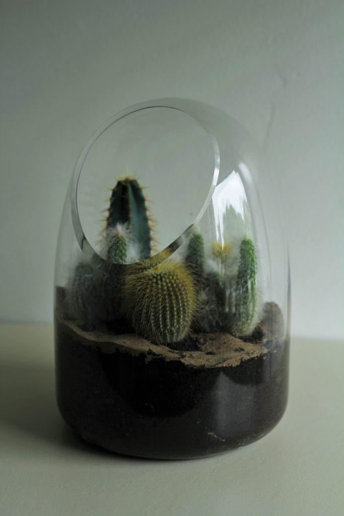 Lasiterraario kaktuksille