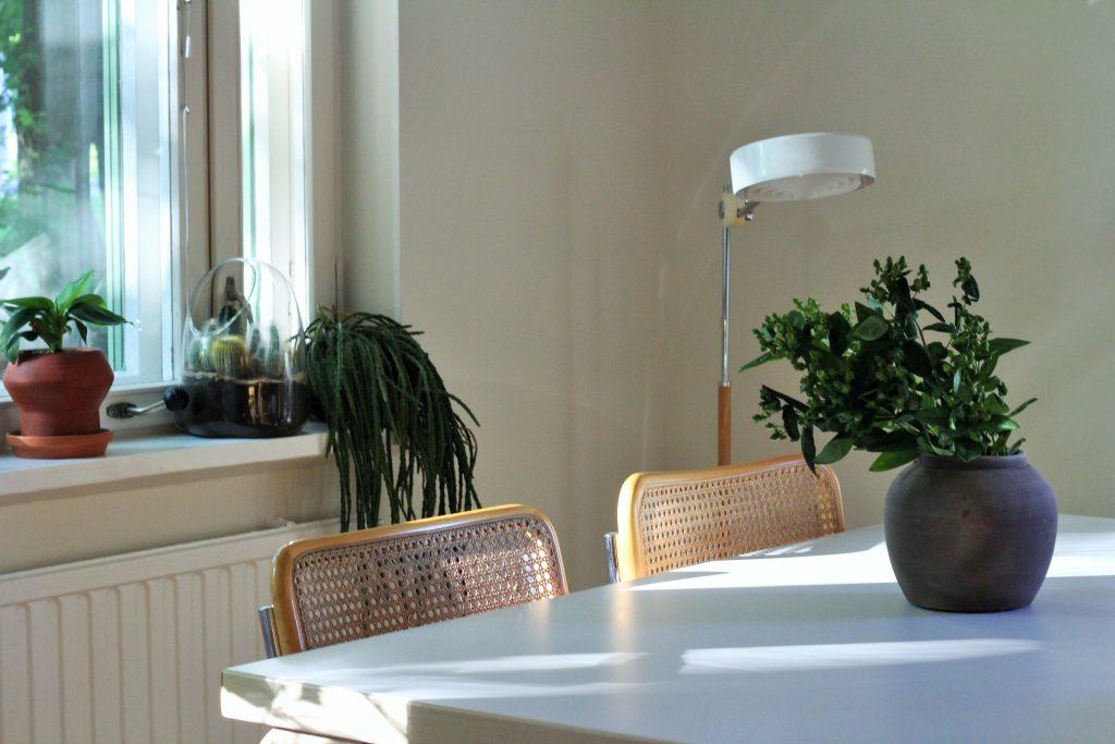 """Ruokailutilan ikkunalaudalla kasvavat upea """"rastatukkakaktukseni"""", minikaktukset terraariossaan, sekä pieni banaanipuun taimi Udumbaran Samujille valmistamassa ruukussa."""