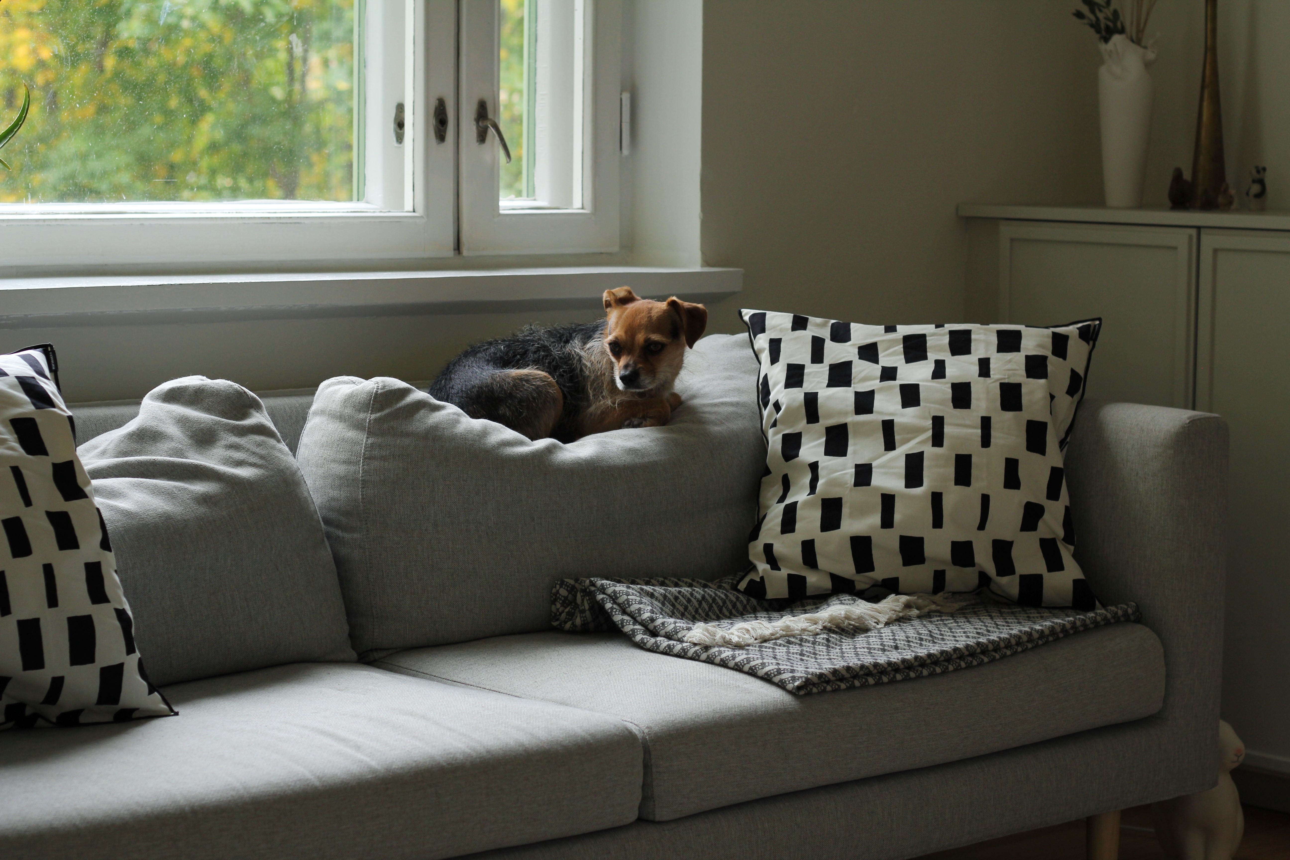 P.S. Kuka valmistaisi sellaiset löhöilynkestävät selkätyynyt koiraperheen sohvaan? Tässä Hakolan sohvassa selkätyynyjen vanu on pituussuunnassa koteloitu, mutta kahden koiran päivittäiset päikkärit ovat tehneet tehtävänsä.